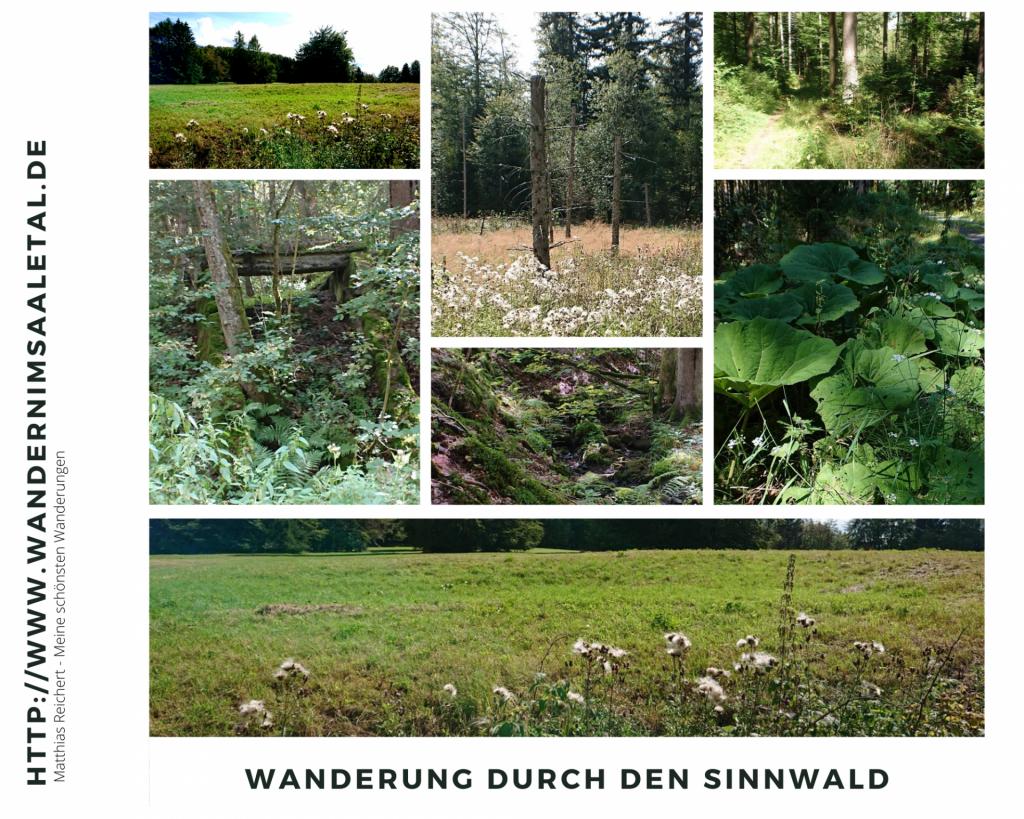 Wanderung durch den Sinnwald